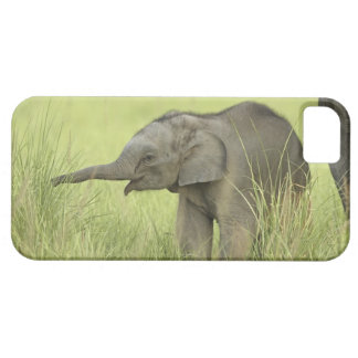 Young one of Indian / Asian Elephant,Corbett iPhone 5 Cases