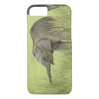 Young one of Indian / Asian Elephant,Corbett iPhone 7 Case