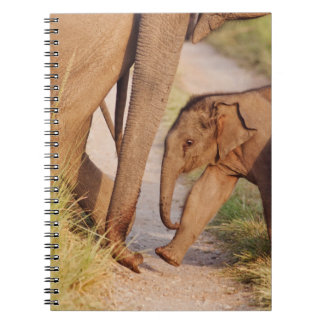 Young one of Indian Asian Elephant Notebooks