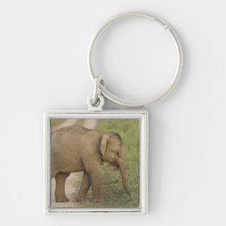 Young one of Indian / Asian Elephant on the Silver-Colored Square Key Ring