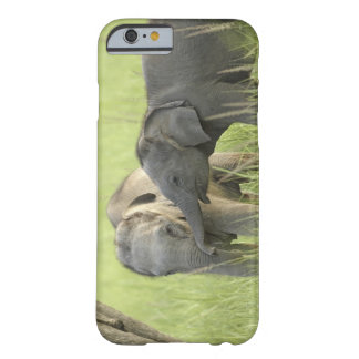 Young ones of Indian / Asian Elephant Barely There iPhone 6 Case