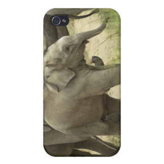 Young ones of Indian / Asian Elephant on the iPhone 4 Covers