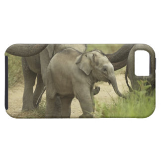 Young ones of Indian / Asian Elephant on the iPhone 5 Cases