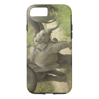 Young ones of Indian / Asian Elephant on the iPhone 7 Case