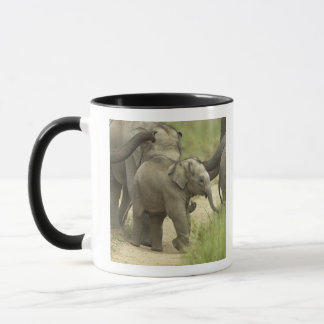 Young ones of Indian / Asian Elephant on the Mug