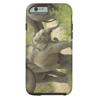 Young ones of Indian / Asian Elephant on the Tough iPhone 6 Case