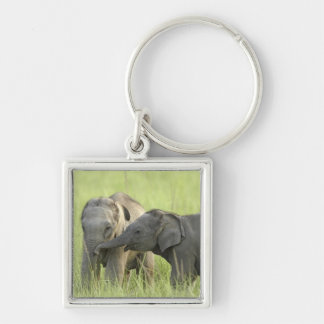 Young ones of Indian / Asian Elephant Silver-Colored Square Key Ring