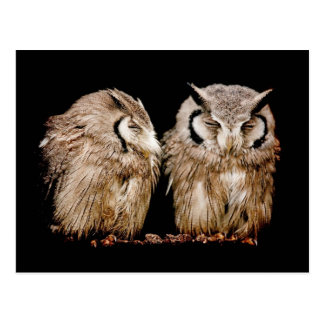 Young Owlets on Dark Background Postcard