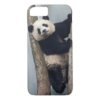 Young Panda climbing a tree, China iPhone 8/7 Case