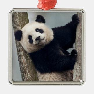 Young Panda climbing a tree, China Metal Ornament