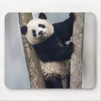 Young Panda climbing a tree, China Mouse Pad