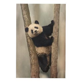 Young Panda climbing a tree, China Wood Print