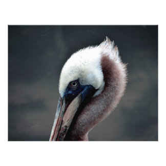 young pelican head view side bird flyers
