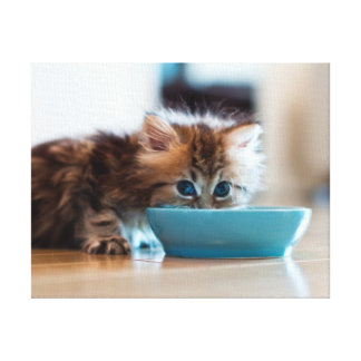 Young Persian kitten with blue eyes Stretched Canvas Print