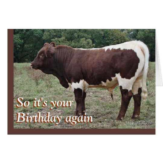 Young Pinzgauer Bull- customise any occasion Card