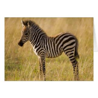Young Plains Zebra Equus quagga) in grass, Greeting Card