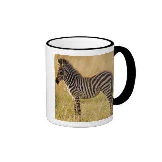 Young Plains Zebra Equus quagga) in grass, Ringer Mug