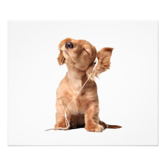 Young Puppy Listening to Music on Headphones Photographic Print