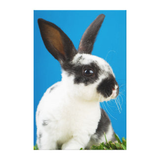 Young Rex rabbit Gallery Wrapped Canvas