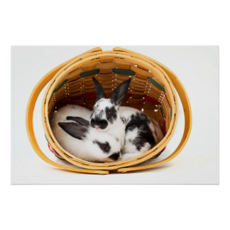 Young Rex rabbits in Easter basket 2 Poster