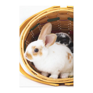 Young Rex rabbits in Easter basket Stretched Canvas Prints