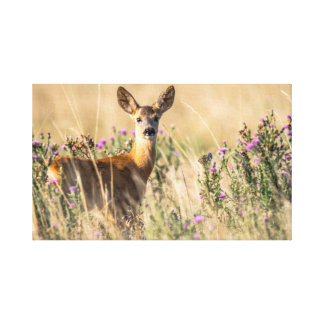 Young Roe Deer in Meadow Canvas Print