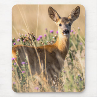 Young Roe Deer in Meadow Mouse Pad