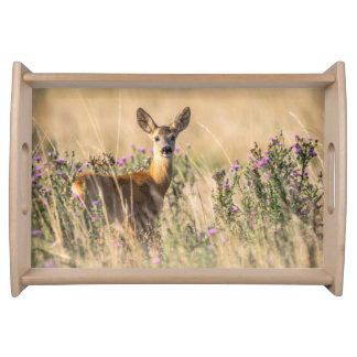Young Roe Deer in Meadow Serving Tray