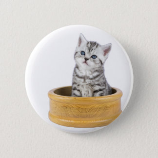 Young silver tabby cat sitting in wooden bowl 6 cm round badge