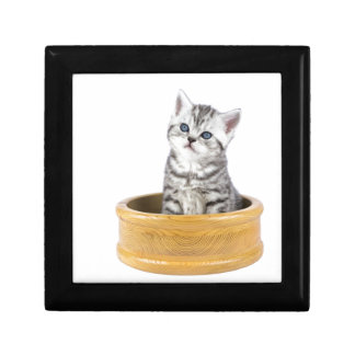 Young silver tabby cat sitting in wooden bowl gift box