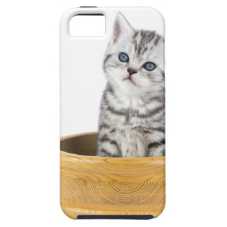 Young silver tabby cat sitting in wooden bowl iPhone 5 cover