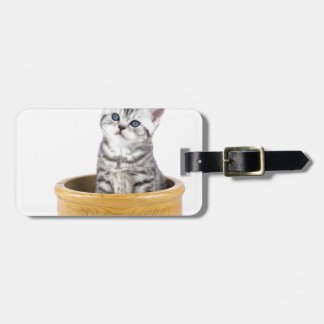 Young silver tabby cat sitting in wooden bowl luggage tag