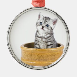 Young silver tabby cat sitting in wooden bowl metal ornament