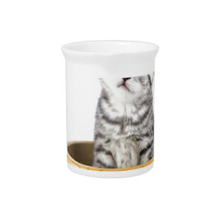 Young silver tabby cat sitting in wooden bowl pitcher