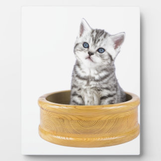 Young silver tabby cat sitting in wooden bowl plaque