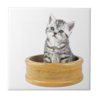 Young silver tabby cat sitting in wooden bowl small square tile