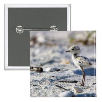 Young Snowy Plovers (Charadrius alexandrinus) 15 Cm Square Badge
