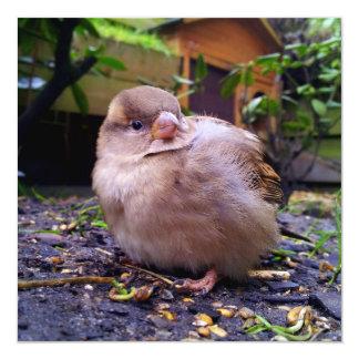 young sparrow 13 cm x 13 cm square invitation card
