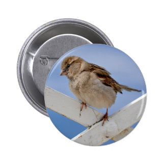 Young sparrow perched 6 cm round badge