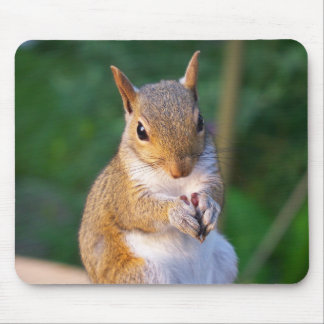 Young squirrel mouse pad