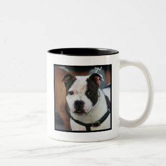 Young Staffordshire Bull Terrier Mug