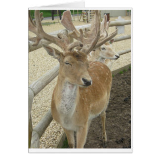 Young Stags Greeting Card