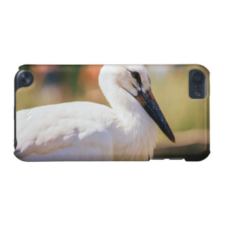 Young Stork Bird, Animal Portrait Photograph iPod Touch 5G Covers