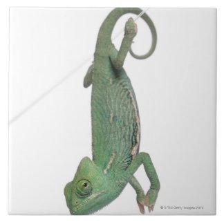 Young veiled chameleon, Chamaeleo calyptratus Ceramic Tile