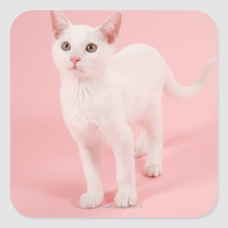 Young white cat 2 square sticker