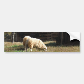 Young White Sheep on the Farm Bumper Stickers