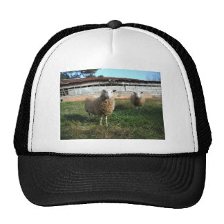 Young White Sheep on the Farm Hats