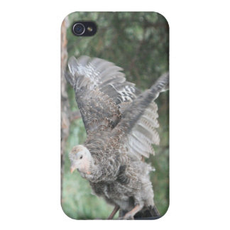 Young Wild Turkey Takeoff 4/4s iPhone 4 Cases