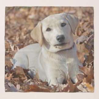 Young Yellow Labrador Retriever Puppy Scarf
