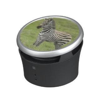 Young Zebra In The Serengeti Plain Bluetooth Speaker
